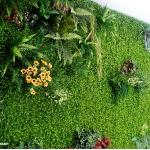 cỏ treo tường giá rẻ