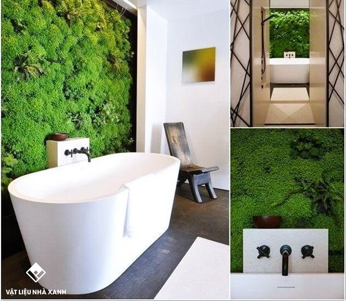 cỏ trang trí nhà tắm chung cư