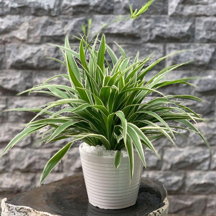 10 loại cây cảnh nội thất dễ trồng