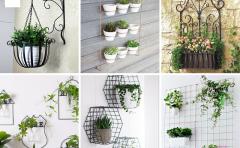 Cùng xem danh sách 10 loại cây cảnh treo tường nhà nhé